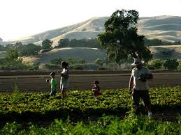 Sacramento Delta Pumpkin Patch by Anr News Releases Agriculture And Natural Resources Blogs