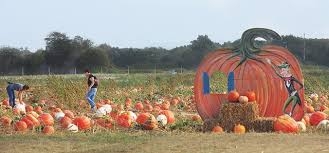 Best Pumpkin Apple Picking Long Island Ny by 10 Activities To Add To Your Long Island Fall Bucket List