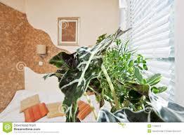 plante verte dans une chambre à coucher plante verte chambre a coucher deco chambre nature chambre