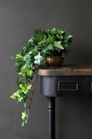 Best Bathroom Pot Plants by Fabulous Faux Trailing Ivy Pot Plant Decorating Home Decorating