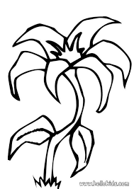 Free Easter Lily Coloring Pages