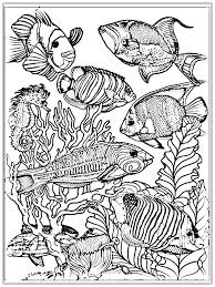 Coloring Pages Free Download For Adults No Printable Downloading Adult Fish Color Realistic Full Size
