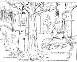 Deciduous Forest Coloring Pages
