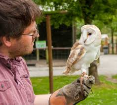 Meet The Birds & Animals - Screech Owl Wildlife Park White Screech Owl Illustration Lachina Bbc Two Autumnwatch Sleepy Barn Owl Yoga Bird Feeder Feast And Barn Wikipedia Attractions In Cornwall Sanctuary Wishart Studios Red Eastern By Ryangallagherart On Deviantart Owlingcom Biology Birding Buddies 2000 Best 2 Especially Images Pinterest Screeching Youtube