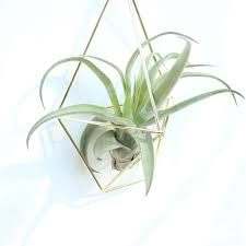 Cheap Rustic Plant Pots Buy Quality Pot Directly From China Rack Suppliers Modern Hanging Tillandsia Air Plants Metal Geometric Himmeli