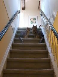 cat stairs 5 ways to stop your ch cat from attempting your stairs with