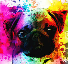 Cute Pug Posters For The Home Or Office In Brilliant Color By Erod Order Prints