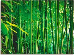 artland wandbild bambus i gräser 1 stück in vielen größen produktarten leinwandbild poster wandaufkleber wandtattoo auch für badezimmer