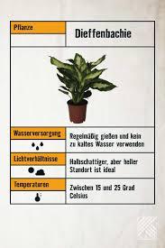 pflegeleichte zimmerpflanzen hornbach in 2021 pflanzen