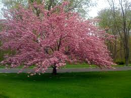 Pink Flocking Spray For Christmas Trees by What U0027s A Gotta Do To Get A Flocked Tree In New England