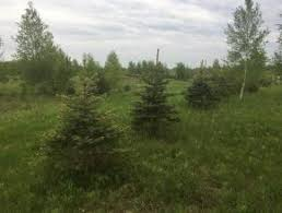 Land And Camps For Sale Ny