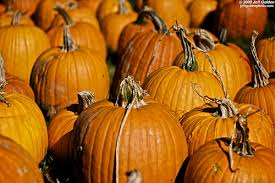 Flower Mound Pumpkin Patch Groupon by Fort Worth On The Cheap Blog Archive Best Pumpkin Patches Near
