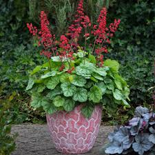 11 Best Plants For Container Gardening The Family Handyman