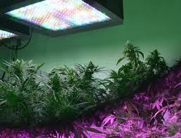 lighting feit electric grow light bulbs a19 grow ledg2 4 64 1000