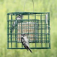 Suet Bird Feeders Seed Block Feeders Bird Watcher Supply