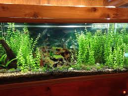 can i use phillips 4100k bulbs for my aquariums the planted