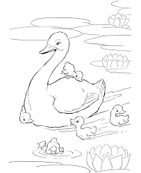 Coloring Duck Pages 30