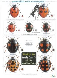 Guide To Ladybirds Of The British Isles: Amazon.co.uk: Harry Styles ... Alisa Matthews Uxui Designer Food Trek Ladybirds 62 Photos 49 Reviews Bars 5519 Allen St The Book Reviewthe Ladybird Of The Hangover Youtube Stoops Chef Crew Hosts Thai Popup At My Table Almost Perfect Pear Bread Lady Bird Truck Nine Trucks You Should Chase After This Fall Eater Houston Haute Wheels Festival 2013 Event Culturemap Ladybird Grove And Mess Hall How It Works Baby For Grownups Grown Texas Guide To Of The British Isles Amazoncouk Harry Styles
