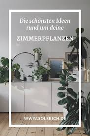 zimmerpflanzen ideen für die dekoration mit pflanzen