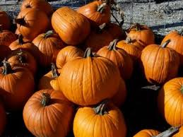 Southern Illinois Pumpkin Patches by 12 Best Pumpkin Patches Around Chicago Images On Pinterest