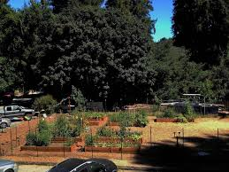 Santa Cruz Summit Christmas Tree Farm by Scmb U2013 A Look At Life In The Mountains Of Santa Cruz