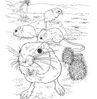 Free Book With Awe Inspiring Desert Animal Coloring Pages Kangaroo Rat