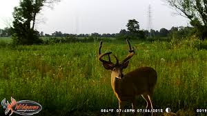 Mule Shed Mover Dealers by Hunting Tactics Hunting Advice And Tips For Serious Deer And
