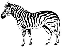 Zebra Coloring Page 983