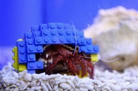 Do Hermit Crabs Shed Their Legs by 7 Reasons Hermit Crabs Are More Fun Than Your Dog