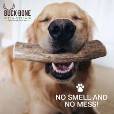 No Shed Dog Breeds Large by Amazon Com Elk Antler Dog Chews By Buck Bone Organics All