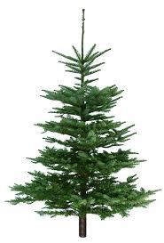 Swansons Favorites Christmas Trees Nursery
