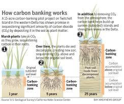 Define Carbon Sink Geography by Uncategorized The Carbon Pilgrim Page 6