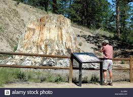 man photographing big stump petrified sequoia tree florissant