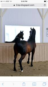 101 Best Model Horse Barns Images On Pinterest | Horse Barns ... The Actual Building Will Be Remade Using The Same Wood As My Other Breyer Horse Crazy Barn In At Schneider Saddlery Model Horses Google Zoeken Photography Pinterest Cws Stables Studio Page 6 Tour 2017 February Youtube This Is Our Main Barn By Horses Too Love Sleichs On Blake Classics Country Stable With Wash Stall Walmartcom Daydreamer Braymere Custom Dad Built Classic Butch Stepped In Something A Nice Easytoplayin To After Image Result Amazoncom Three Toys Games