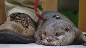 wildes wohnzimmer otter an bord