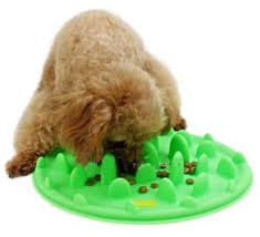 7 Cat Puzzle Slow Feeders Make Cat Lose Weight Product Review