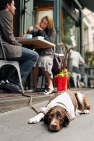 Dog Friendly Restaurants In New York City