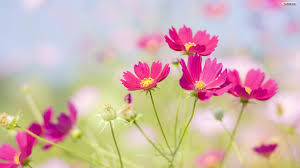 Beautiful Flowers Collection BILBIL Wallpapers