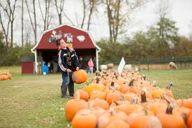 Pumpkin Picking Nj Corn Maze by Wickham U0027s Pick U0027n Patch U0026 Corn Maze Pumpkin Farm Corn Maze