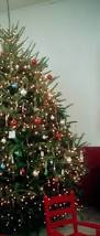 Fraser Christmas Tree Care by Care For Your North Carolina Fraser Fir Nc State Extension