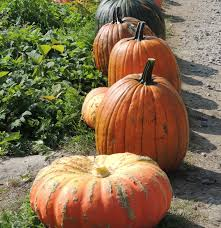 Pumpkin Picking Maine by October 2012 U2013 Artfoodhome Com