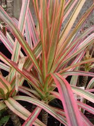 zimmerpflanzen die wenig licht benötigen und trotzdem was