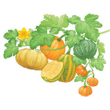 Natural Fertilizer For Pumpkins by All About Growing Pumpkins Organic Gardening Mother Earth News