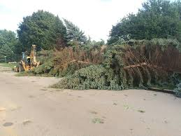Pinery Christmas Trees by Tornado Inspires Amazement At Toll On Big Trees Limited Damage To