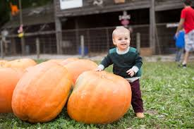 Rombachs Pumpkin Patch Hours by Pumpkins And Progress The Bona Fide Blonde