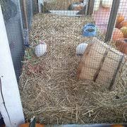 Pumpkin Patch San Jose 2015 by Peppertree Pumpkin Patch Pumpkin Patches Union Ave U0026 Camden