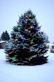 Outdoor Christmas Tree 25