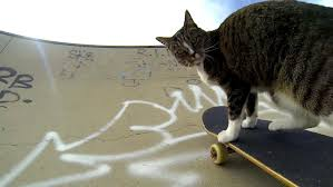 cat on gopro didga the skateboarding cat