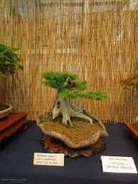 Sussex Bonsai Group's Display At South Downs Garden Centre ... Stanmer House Wedding Park Brighton Sussex Manor Barn Gardens Bexhill East Sussex Uk Stock Photo Royalty The English Wine Centre Oak And Green Lodge Best River Kate Toms Wedding Venue Berwick Hitchedcouk Wines Garden Canopies Walkways Community News Tates Of Bybrook Fordingbridge Plc Bonsai Groups Display At South Downs Gardens Great Dixter By Christopher Lloyd