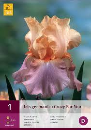iris bulbs for sale buy cheap your iris bulbs